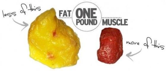 fat-vs-muscle